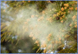 花粉はシミの原因に。